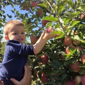 apples400x400
